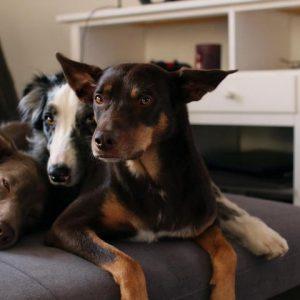 Hundezubehör für Zuhause