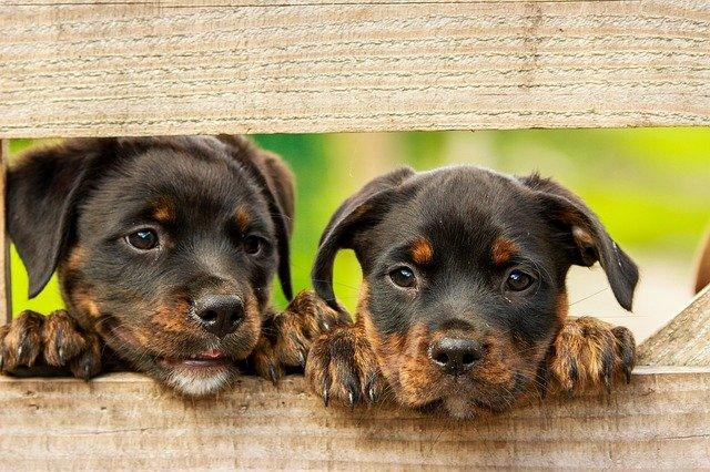 Hundenahrung - Hundezubehör
